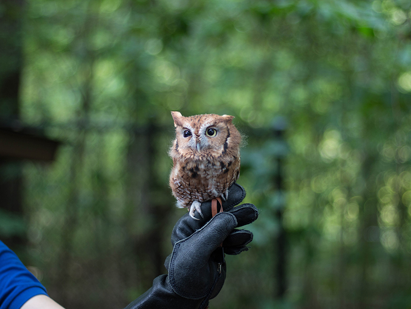 wilderness volunteer in canada baby owl